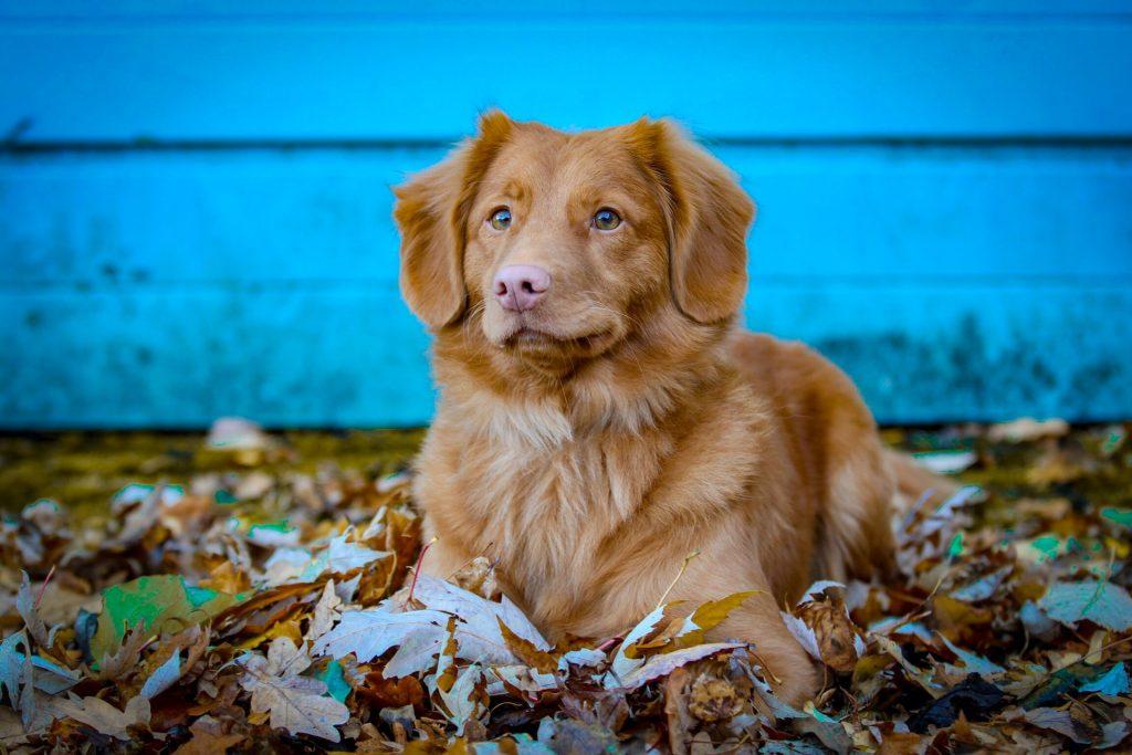 toller hondje